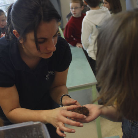Atelier découverte - Activités pédagogiques - Aquarium La Rochelle