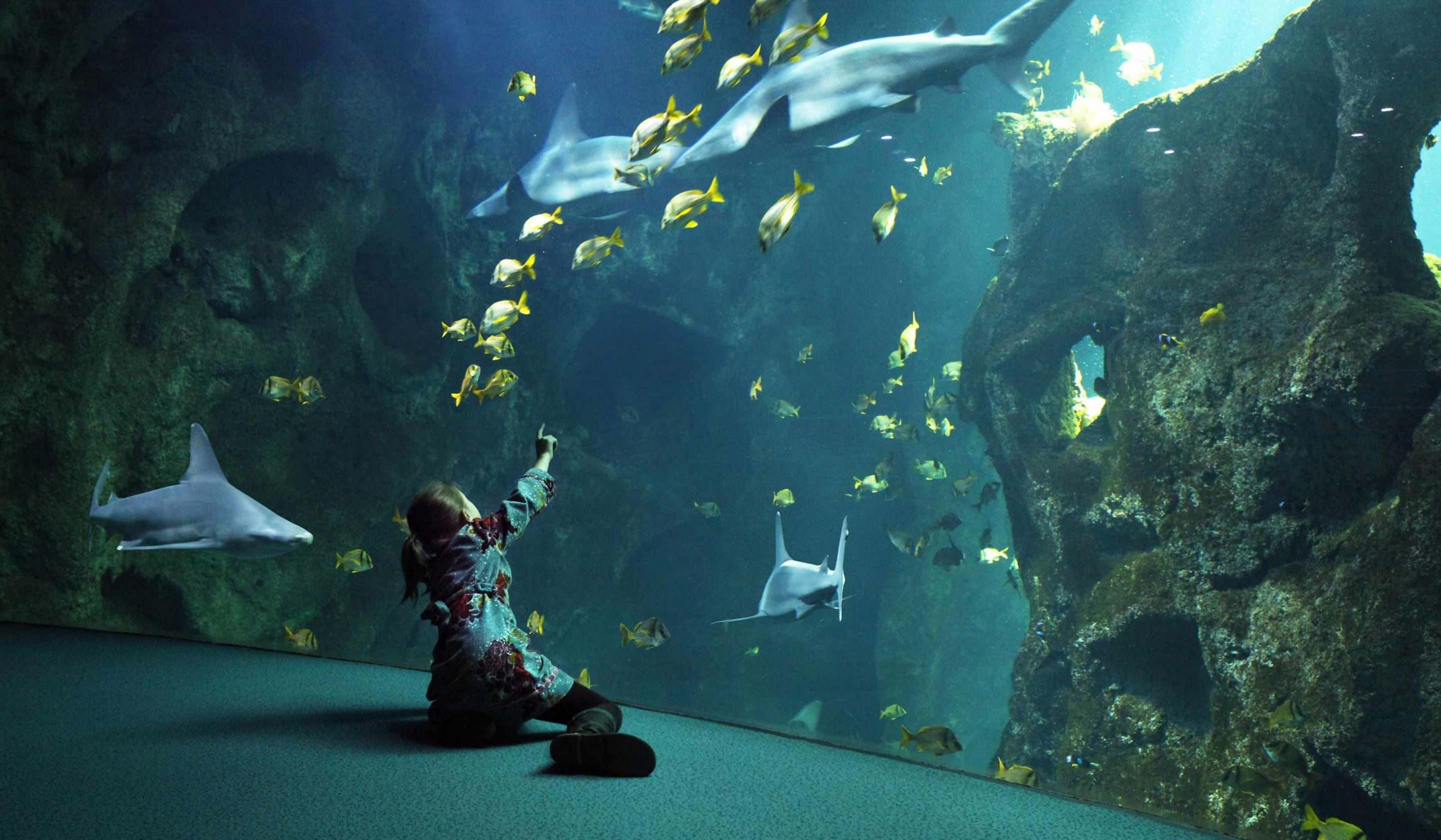 Missions pédagogiques - Aquarium La Rochelle