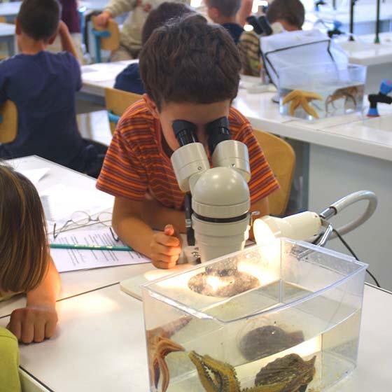 Travaux pratiques - Aquarium La Rochelle