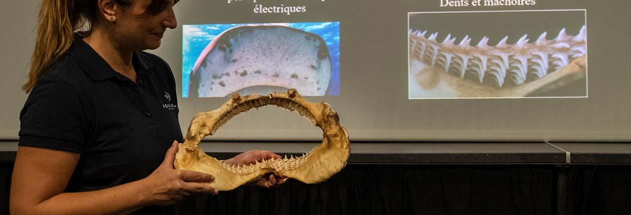 Rencontre thématique - Activités pédagogiques - Ressources enseignants - Aquarium La Rochelle