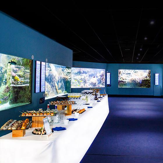Visite privilège - Séminaire et Privatisation - Aquarium La Rochelle