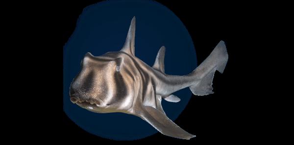 Coulisses - Aquarium La Rochelle - Requins
