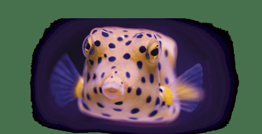 Poisson coffre - Aquarium La Rochelle