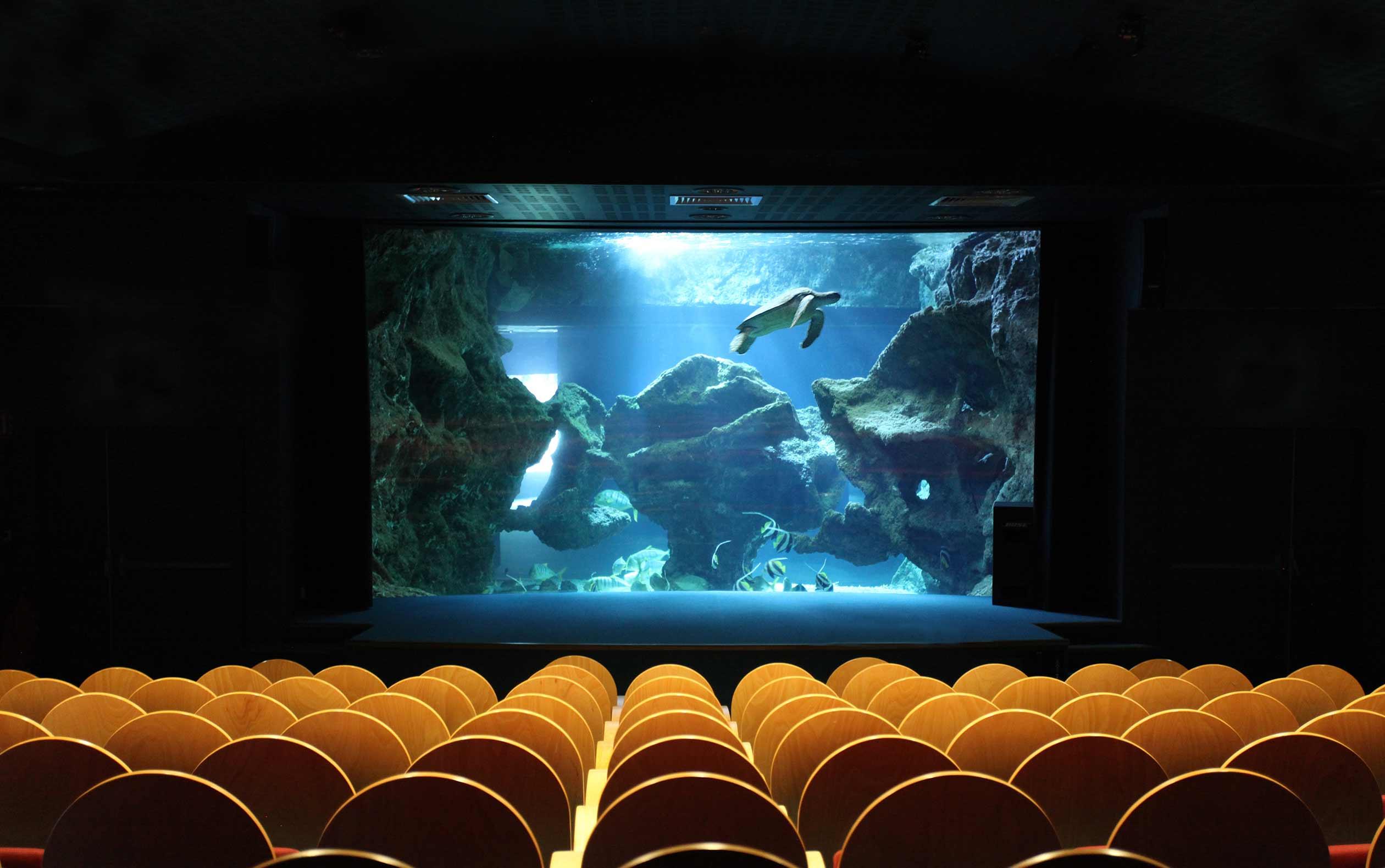 Amphithéâtre René Coutant - Séminaire et privatisation - Aquarium La Rochelle