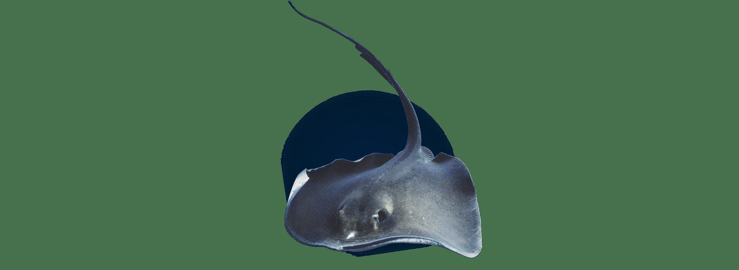 Recherche scientifique - Aquarium La Rochelle
